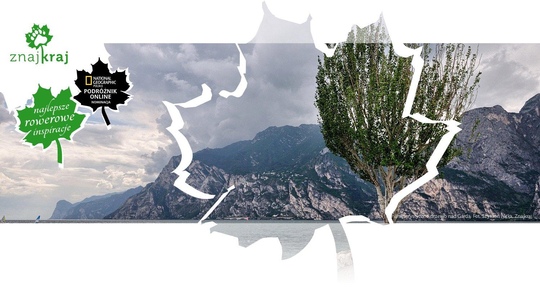 Charakterystyczne drzewo nad Gardą