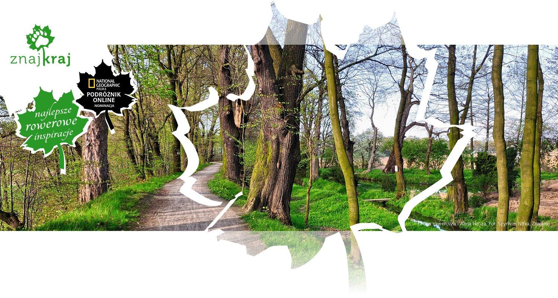 Droga rowerowa - Aleja Hroza
