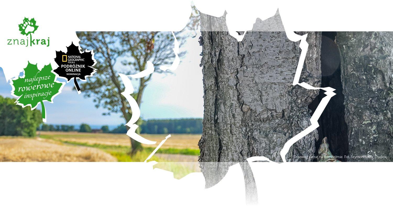 Drzewny skrzat na Bornholmie