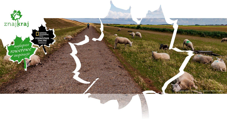 Fryzyjskie owce w upale