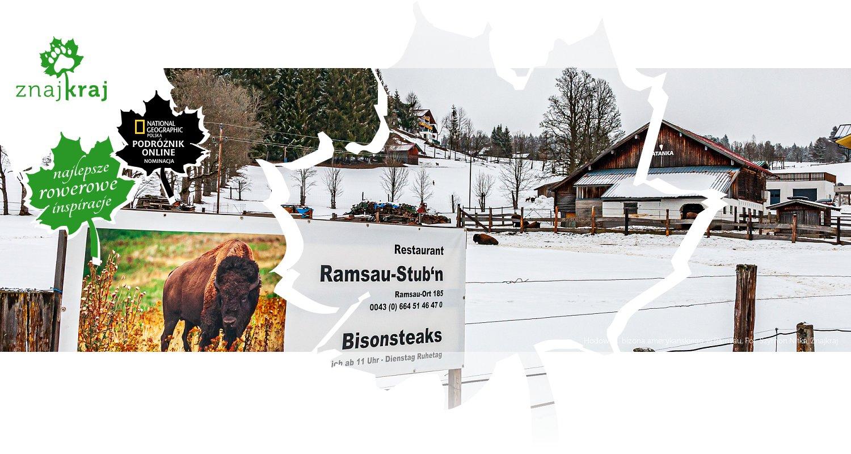 Hodowla... bizona amerykańskiego w Ramsau