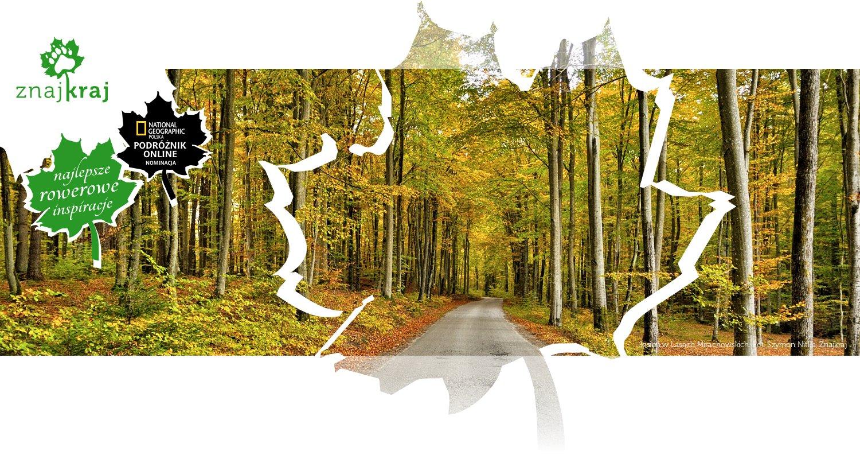 Jesień w Lasach Mirachowskich