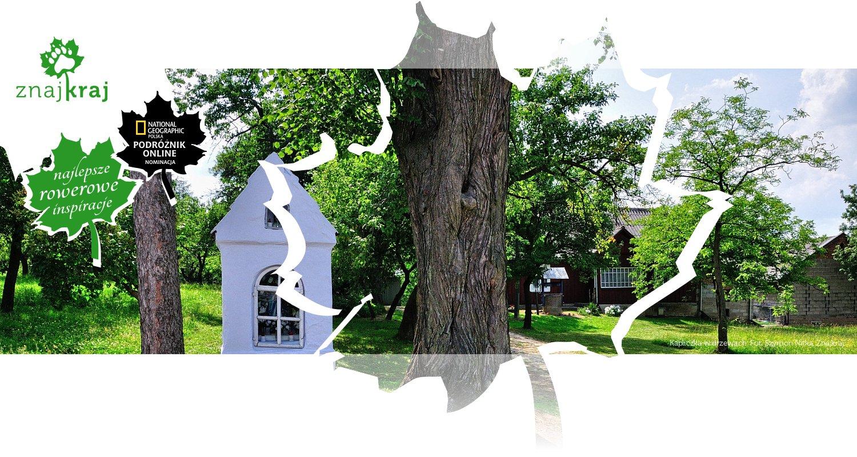 Kapliczka w drzewach
