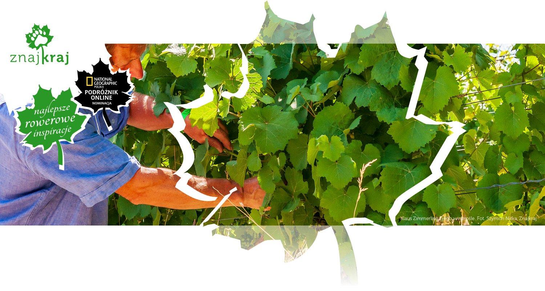 Klaus Zimmerling i jego winorośle