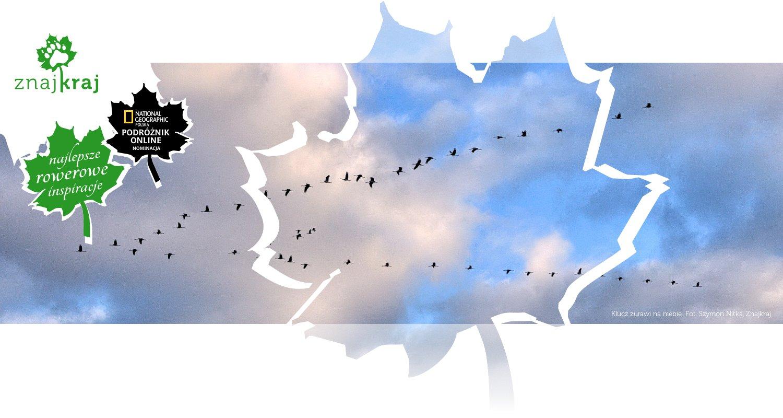 Klucz żurawi na niebie