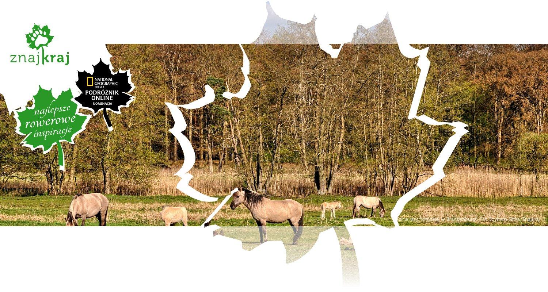 Konie rasy fiordzkiej w Brandenburgii