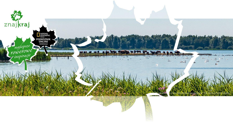 Koniki polskie w Parku Narodowym Lauwersmeer