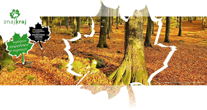 Kurhan w lesie koło Uniradzów