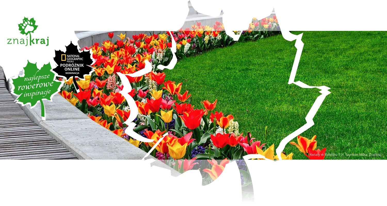 Kwiaty w Rybniku