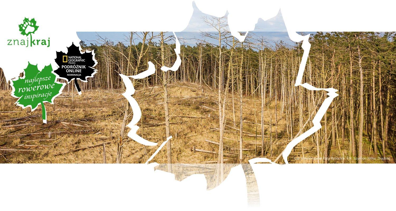 Las w rezerwacie Kąty Rybackie
