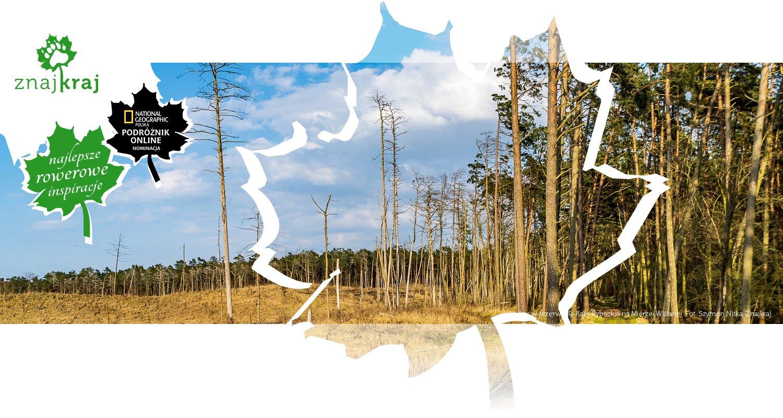 Las w rezerwacie Kąty Rybackie na Mierzei Wiślanej