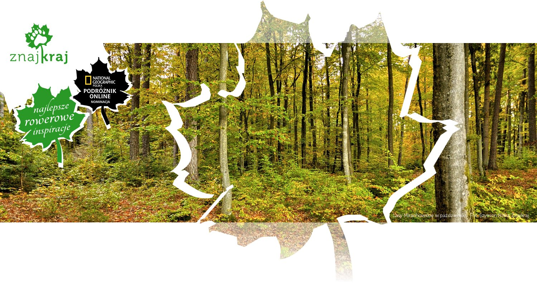 Lasy Mirachowskie w październiku