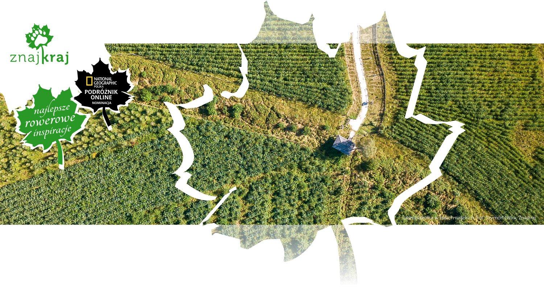Leśna szkółka w lasach rudzkich