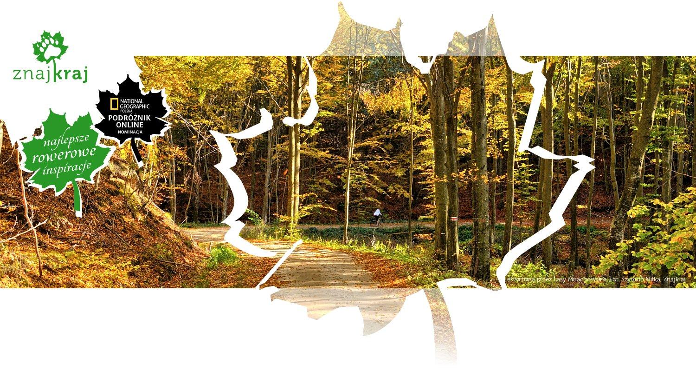Leśna trasa przez Lasy Mirachowskie