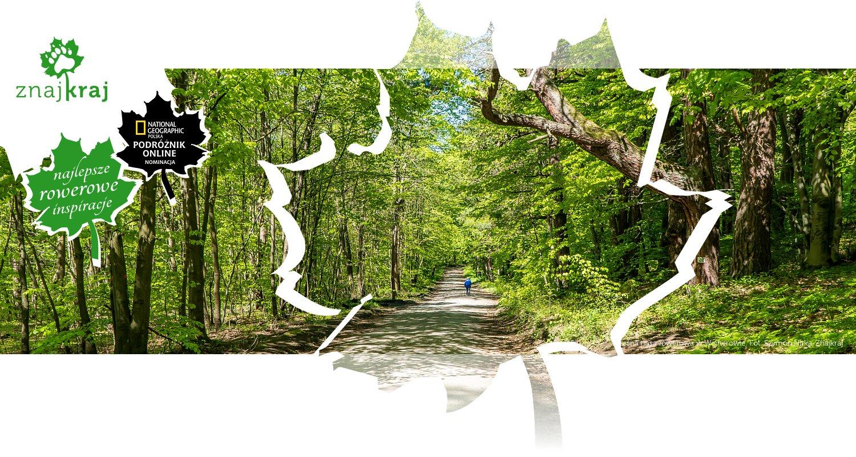 Leśna trasa rowerowa w Wejherowie