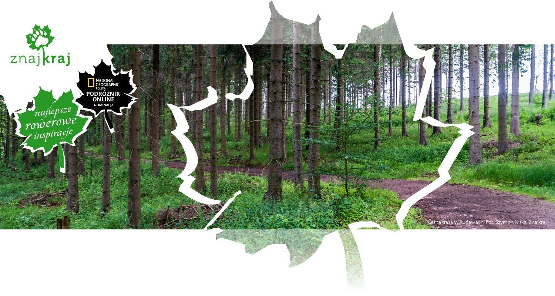 Leśna trasa w Rudawach