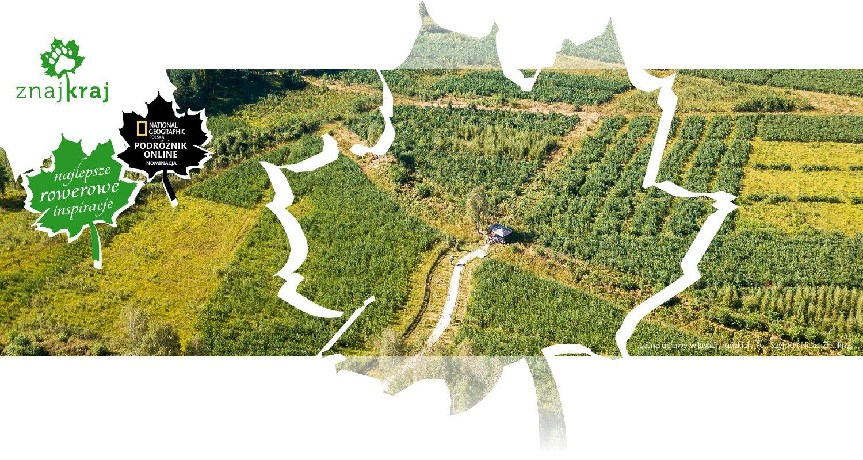 Leśne uprawy w lasach rudzkich