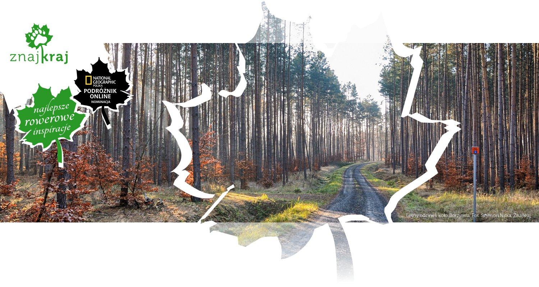 Leśny odcinek koło Borzymia