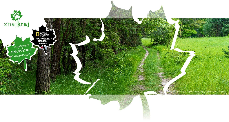 Leśny odcinek Szlaku Orlich Gniazd