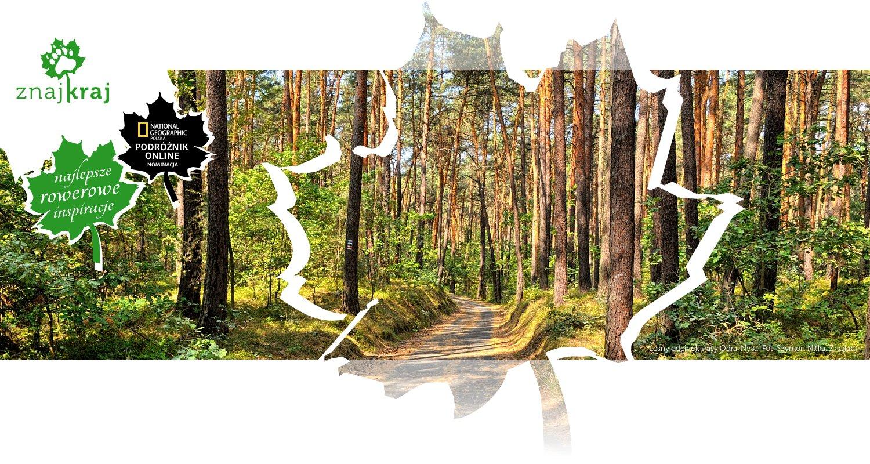 Leśny odcinek trasy Odra-Nysa