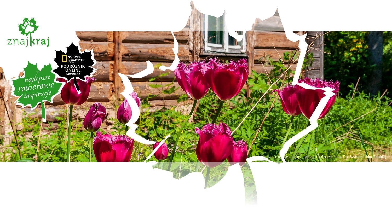 Łotwa w miniaturze - piękne kwiaty przed starą chatą