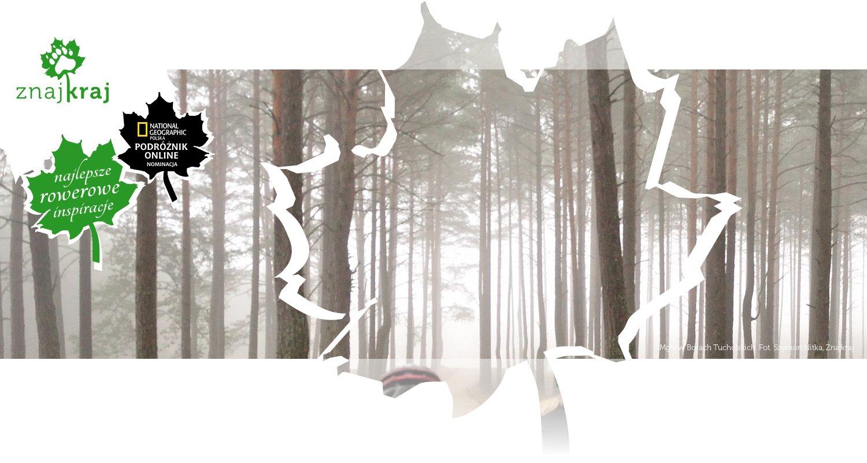 Mgła w Borach Tucholskich
