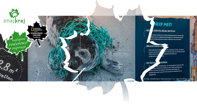 Młoda foka uwięziona w rybackiej sieci