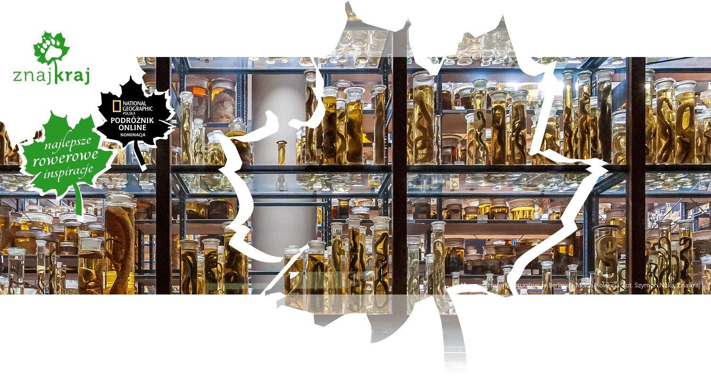 Muzeum Historii Naturalnej w Berlinie - Mokra Kolekcja
