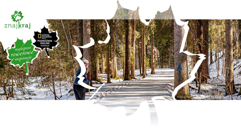 Na biegowkach po alpejskim lesie