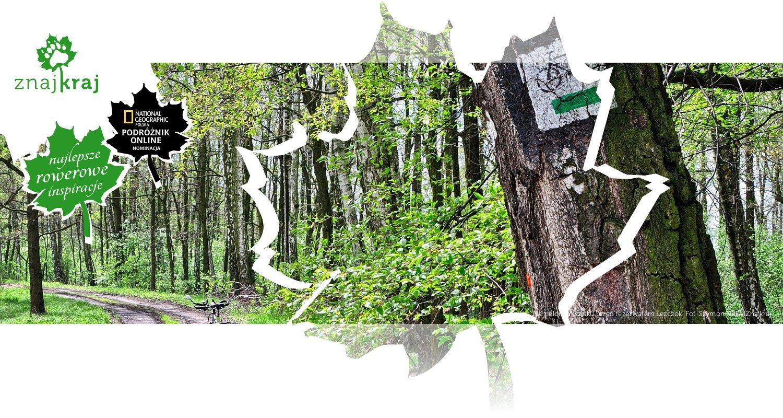 Na zielonym szlaku przed rezerwatem Łężczok