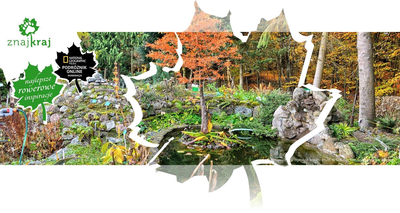 Oczko wodne w ogrodzie botanicznym w Gołubiu