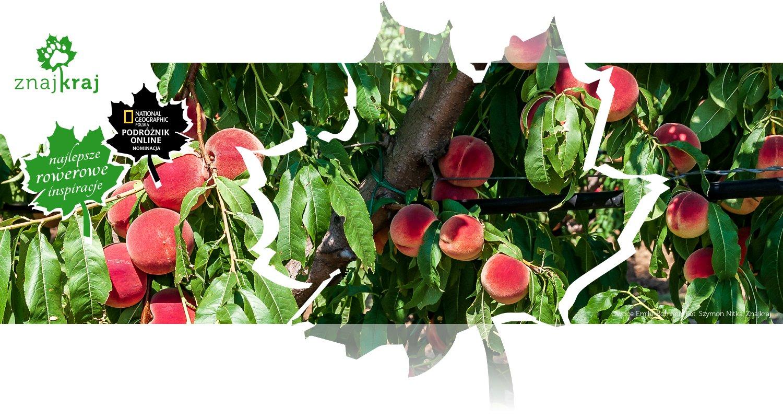 Owoce Emilii-Romanii