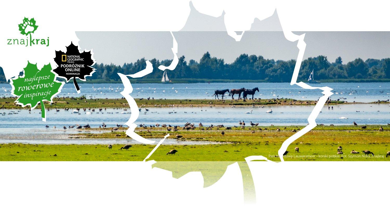 Park Narodowy Lauwersmeer - koniki polskie
