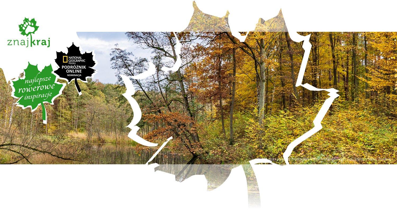 Piękna złota jesień w Brodnickim Parku Krajobrazowym