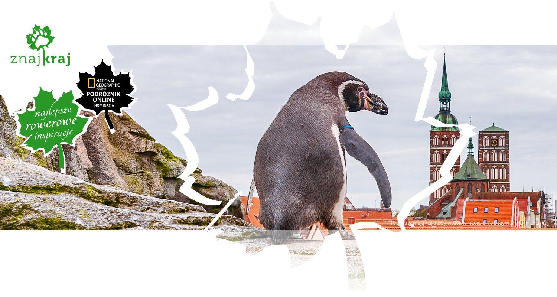Pingwiny mają najlepszy widok w mieście