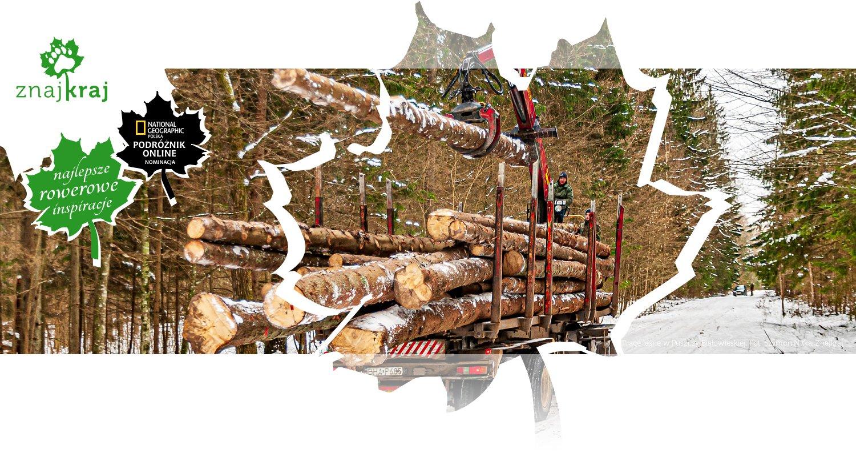 Prace leśne w Puszczy Białowieskiej