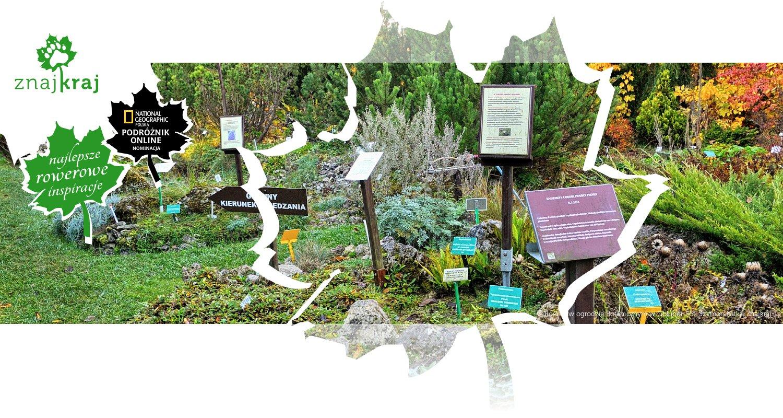 Rośliny w ogrodzie Botanicznym w Gołubiu