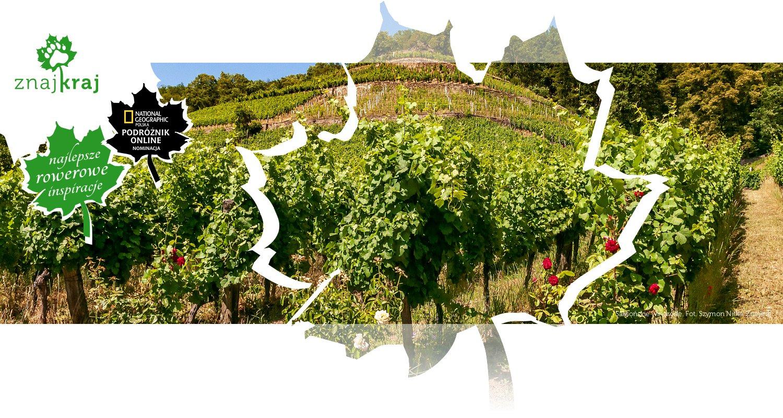 Saksońskie winorośle