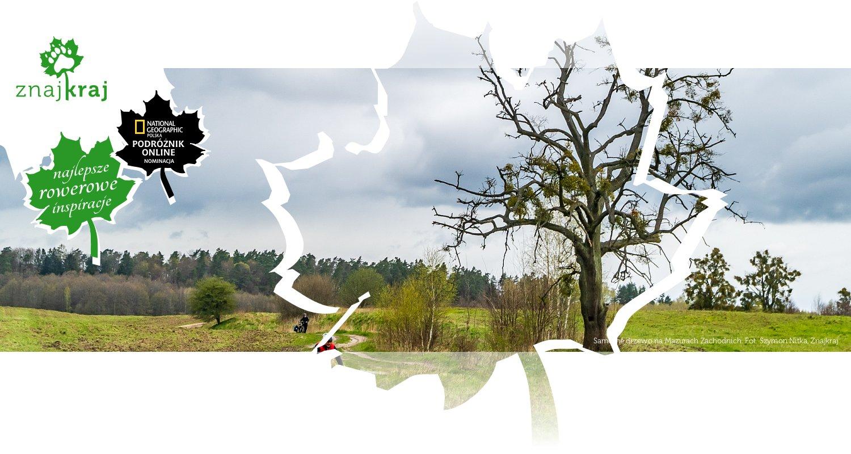 Samotne drzewo na Mazurach Zachodnich