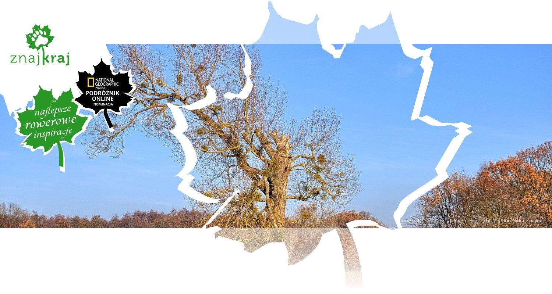 Samotne drzewo przy szlaku Blue Velo