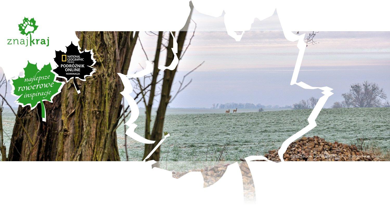 Sarny na polu koło Przyjezierza