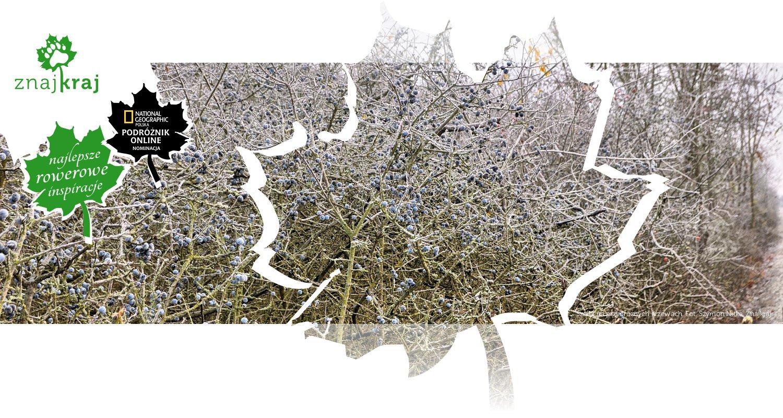 Szadź na przydrożnych krzewach