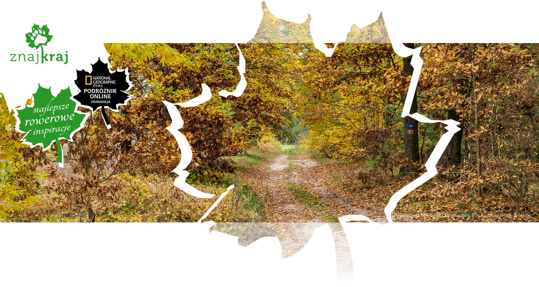 Szlak pieszy na Pojezierzu Brodnickim