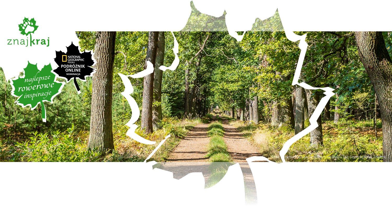 Szlak rowerowy w lasach rudzkich na Śląsku