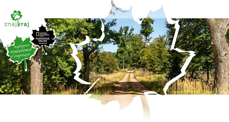 Trasa rowerowa w lasach rudzkich