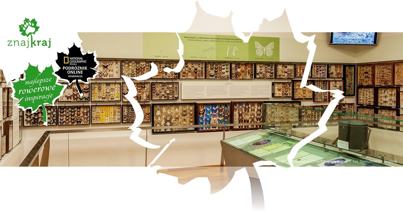 Trzecia największa kolekcja much w Europie w Admont