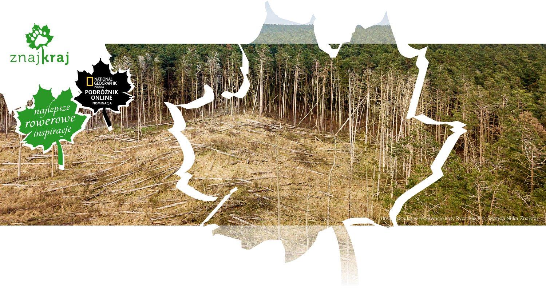 Umierający las w rezerwacie Kąty Rybackie