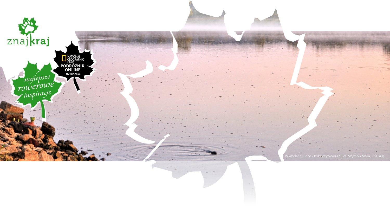 W wodach Odry - bóbr czy wydra?