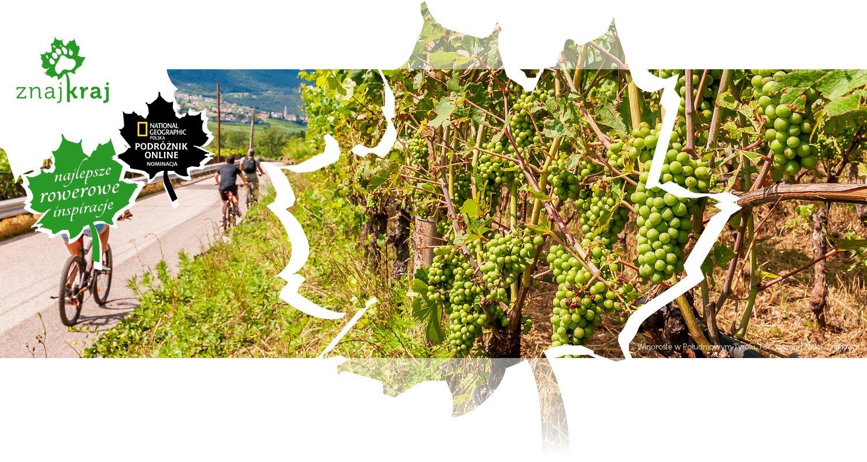 Winorośle w Południowym Tyrolu