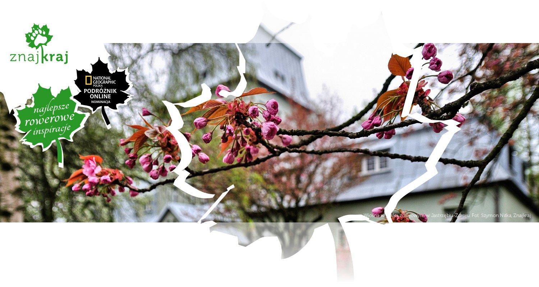 Wiosna w parku zdrojowym w Jastrzębiu-Zdroju
